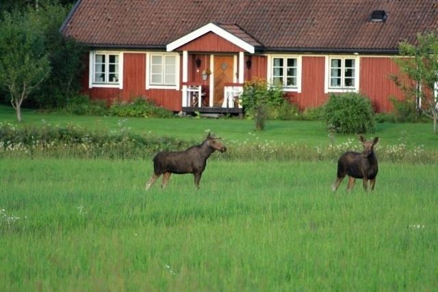 Schweden2011.0651