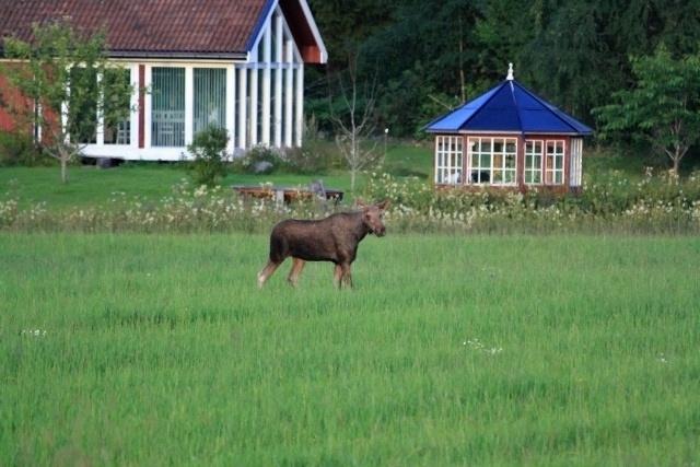 Schweden2011.0653