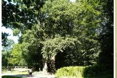 Tausendjährige Eiche im Park von Schloss Bosjökloster